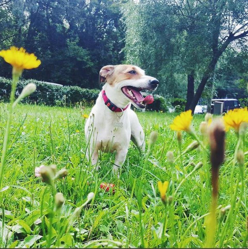 Самого счастливого пса в мире запечатлела Саша Савельева. Еще бы, у него-то лето на дворе.