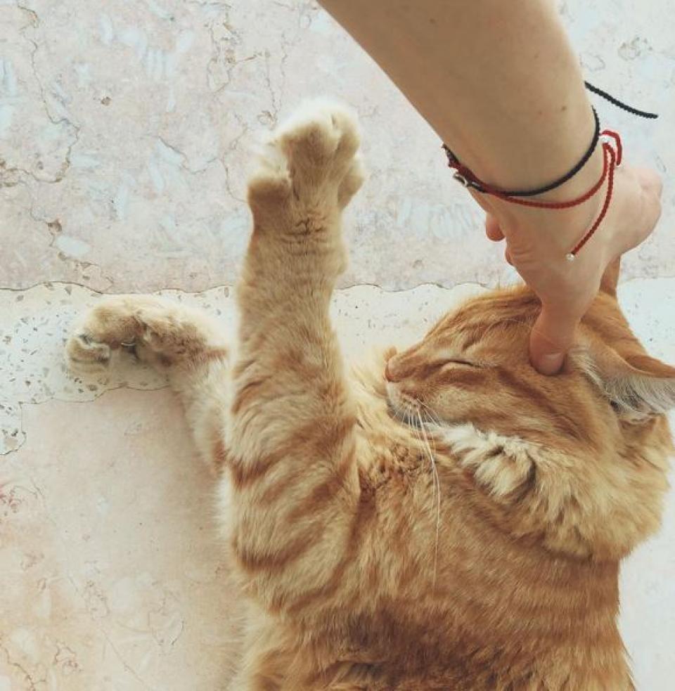 У кошки Юлианны Карауловой есть личный массажист. Кто? Юлианна Караулова