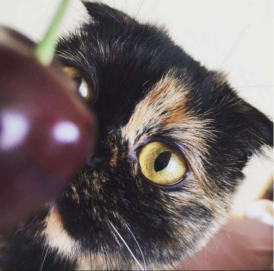 А у Кристины Si вышел печальный котик. Или тоже призадумался?
