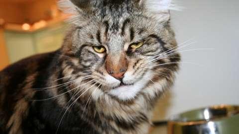 Топ 10 самых дорогих кошек в мире