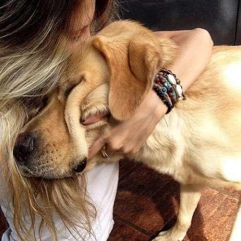 Ученые доказали, что собаки нас понимают!