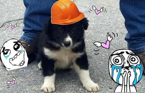 Спасённый щенок станет спасателем сам