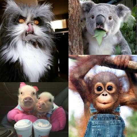 На какое животное ты похож?