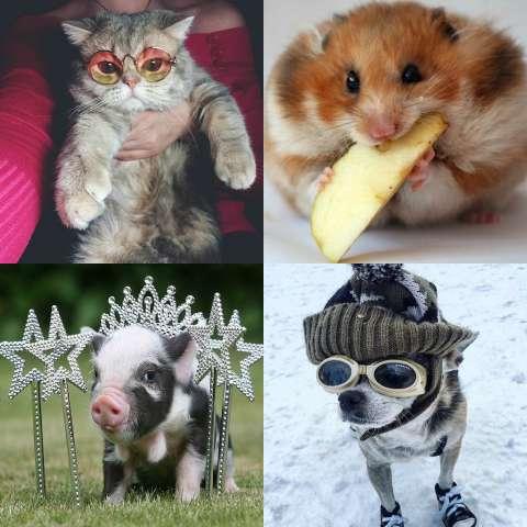 На какое домашнее животное ты похож?