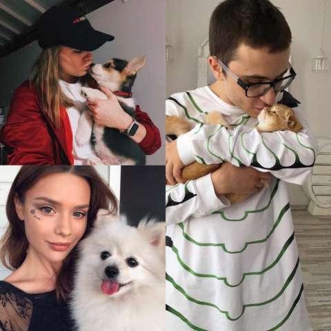 Instagram-аккаунты домашних животных блогеров