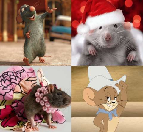 Какая ты крыса?